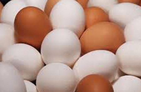Picture for category Egg