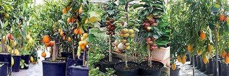 Picture for category Fruit Plant